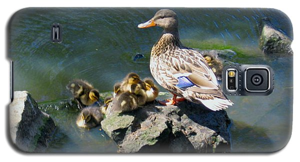 The Swimming Lesson Galaxy S5 Case by Rory Sagner
