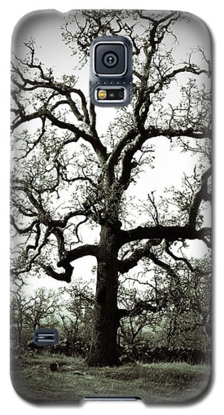 The Tree Galaxy S5 Case