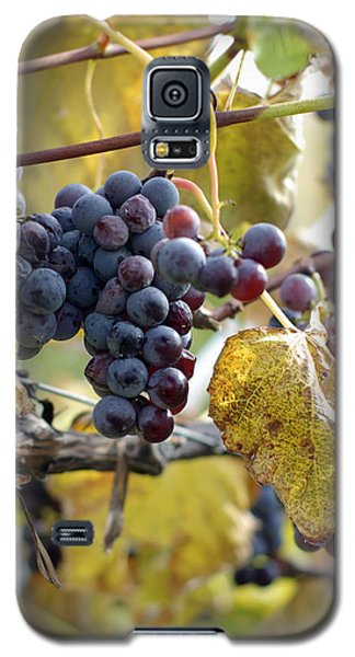 Galaxy S5 Case featuring the photograph The Vineyard by Linda Mishler