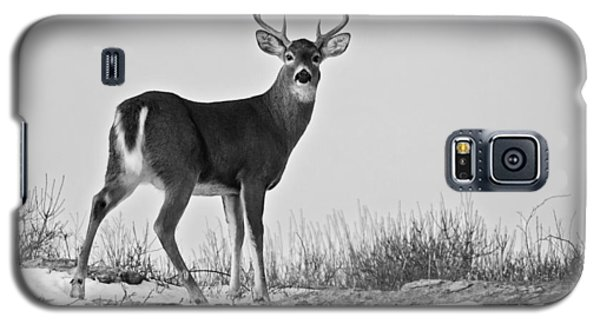 Galaxy S5 Case featuring the photograph The Watching Deer by Nancy De Flon