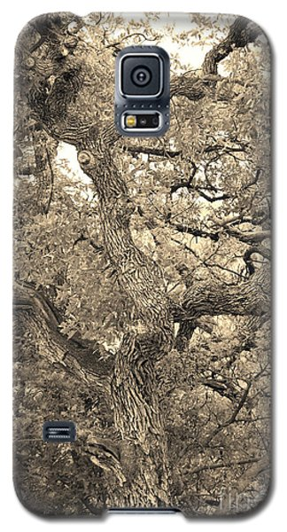 The Wicked Tree Galaxy S5 Case