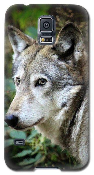 The Wolf Galaxy S5 Case by Steve McKinzie
