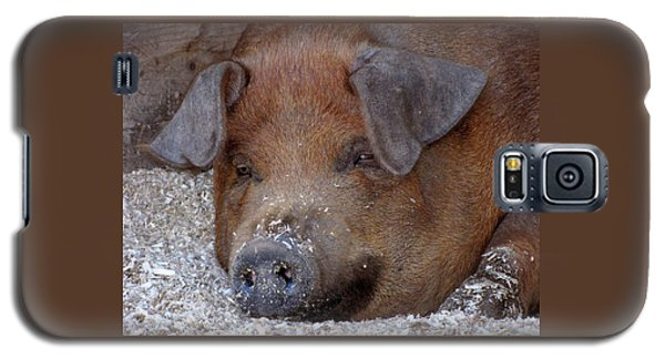 This Little Piggy Took A Nap Galaxy S5 Case