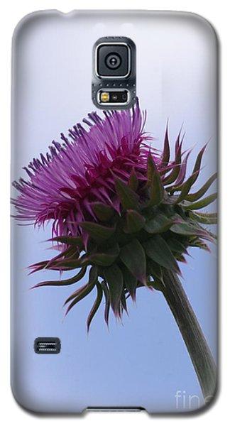 Thistle 1 Galaxy S5 Case