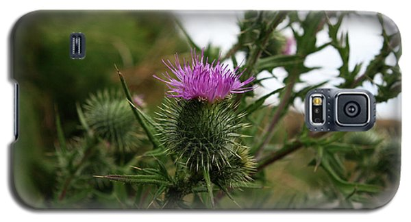 Galaxy S5 Case featuring the photograph Thistle Bloom by Lorraine Devon Wilke