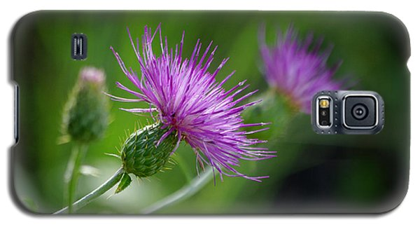 Galaxy S5 Case featuring the photograph Thistle Dance by Vicki Pelham