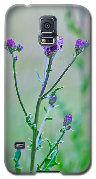 Thistledown Pastel Passion Galaxy S5 Case