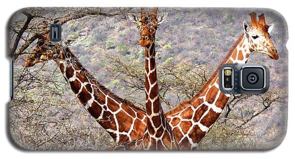Three Headed Giraffe Galaxy S5 Case