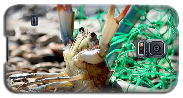Galaxy S5 Case featuring the photograph Crab Throw Me Something Mister by Luana K Perez