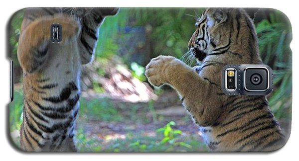 Tiger Cubs Boxing Galaxy S5 Case