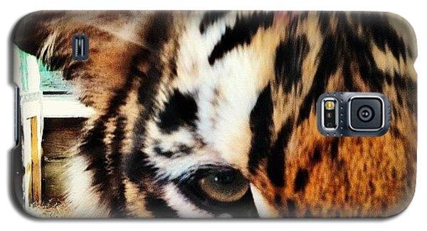 Cool Galaxy S5 Case - Tiger by Lea Ward