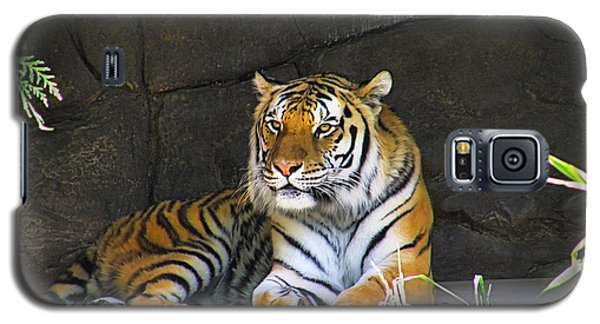 Galaxy S5 Case featuring the photograph Tiger Life by Wendy McKennon