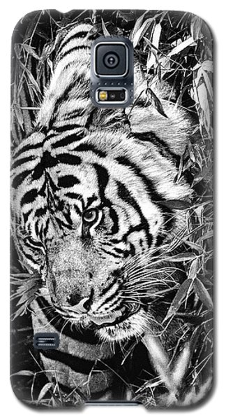 Tiger Galaxy S5 Case by Perla Copernik