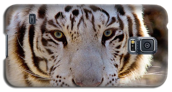 Tiger Stripes Exotic Animal Sanctuary 8 Galaxy S5 Case by Dan Wells