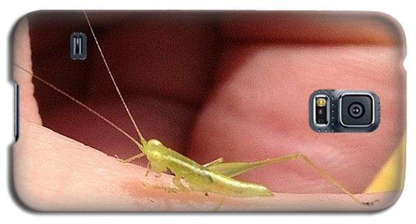 Instagramhub Galaxy S5 Case - Tiny Grasshopper by Cameron Bentley