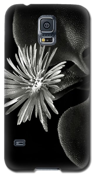 Tiny Ice Plant In Black And White Galaxy S5 Case