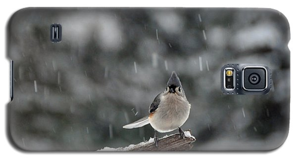 Titmouse Endures Snowstorm Galaxy S5 Case by Mike Martin