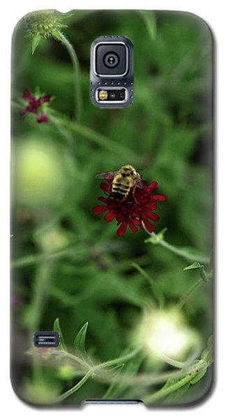 Galaxy S5 Case featuring the photograph To Bee by Lorraine Devon Wilke