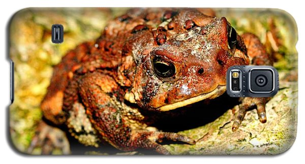 Galaxy S5 Case featuring the photograph Toad by Joe  Ng