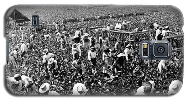 Tobacco Field In Montpelier - Jamaica - C 1900 Galaxy S5 Case