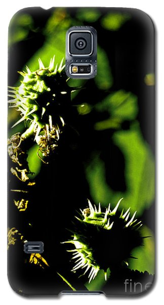 Galaxy S5 Case featuring the photograph Touched By The Late Afternoon Sun by Steve Taylor