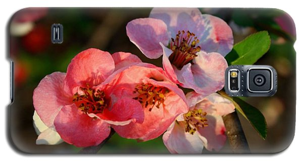 Galaxy S5 Case featuring the photograph Toyo Nishiki Quince by Kathryn Meyer