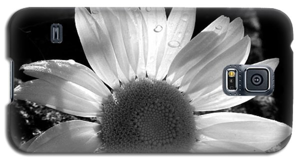Galaxy S5 Case featuring the photograph Translucent Daisy by Cindy Haggerty