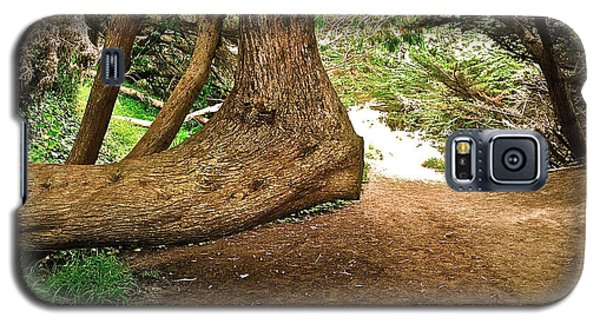 Galaxy S5 Case featuring the photograph Tree And Trail by Bill Owen