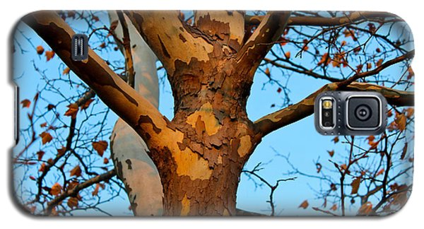 Galaxy S5 Case featuring the photograph Tree In Camo by Rachel Cohen