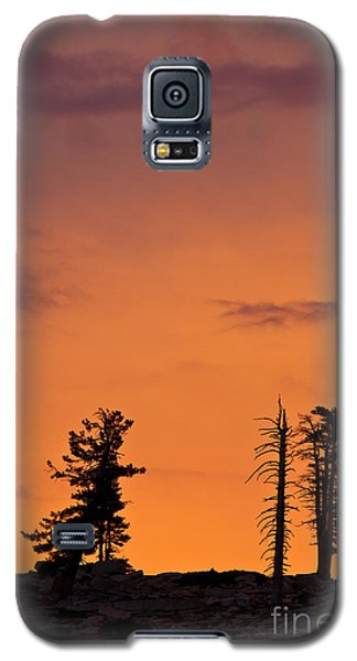 Trees At Sunset Galaxy S5 Case