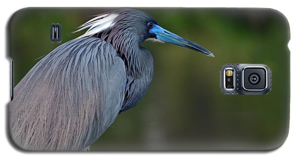 Tricolored Heron Galaxy S5 Case