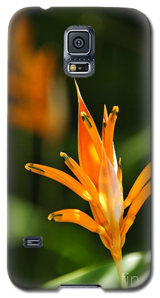 Parakeet Galaxy S5 Case - Tropical Orange Heliconia Flower by Elena Elisseeva