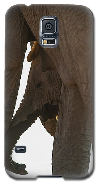Trunk Touch Galaxy S5 Case
