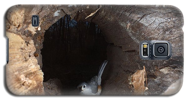Tufted Titmouse In A Log Galaxy S5 Case by Ted Kinsman