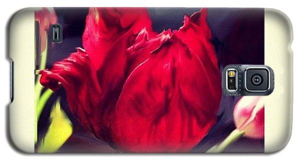 Tulip Aflame Galaxy S5 Case by Paul Cutright