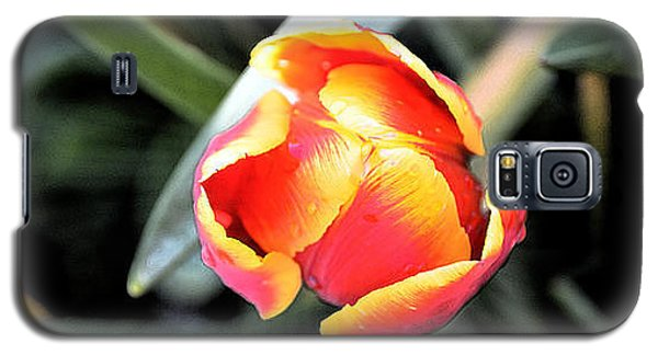 Galaxy S5 Case featuring the photograph Tulip In Bloom by Pravine Chester
