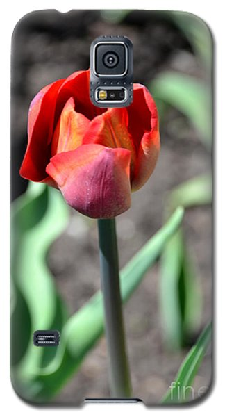 Galaxy S5 Case featuring the photograph Tulip by Pravine Chester