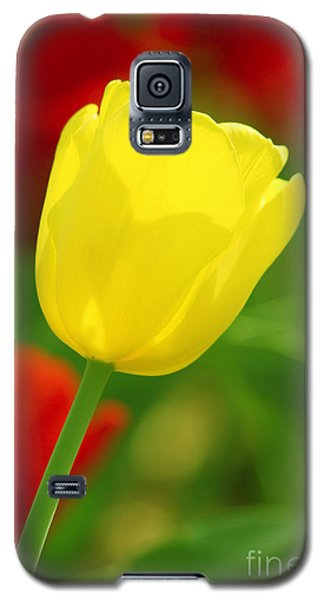 Tulipan Amarillo Galaxy S5 Case