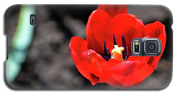 Galaxy S5 Case featuring the photograph Tulips Blooming by Pravine Chester