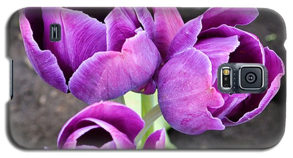 Tulips Queen Of The Night Galaxy S5 Case