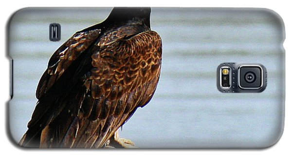 Galaxy S5 Case featuring the photograph Turkey Vulture On Limb by Roena King