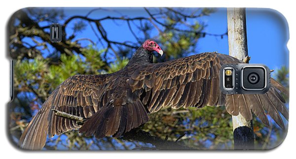 Turkey Vulture With Wings Spread Galaxy S5 Case by Sharon Talson