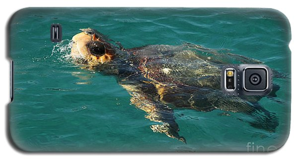 Galaxy S5 Case featuring the photograph Turtle by Milena Boeva