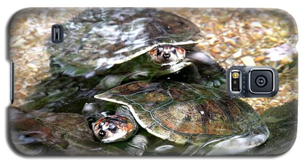 Turtle Two Turtle Love Galaxy S5 Case
