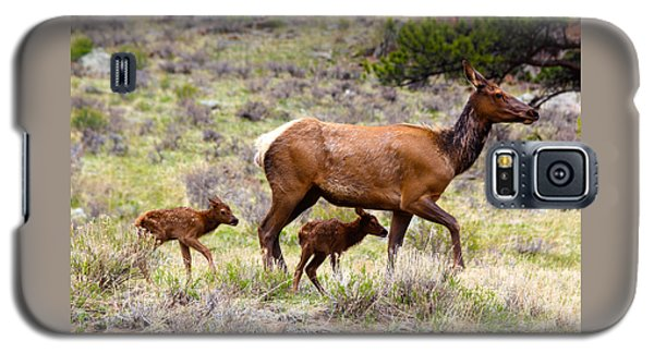 Twin Elk Calves Galaxy S5 Case