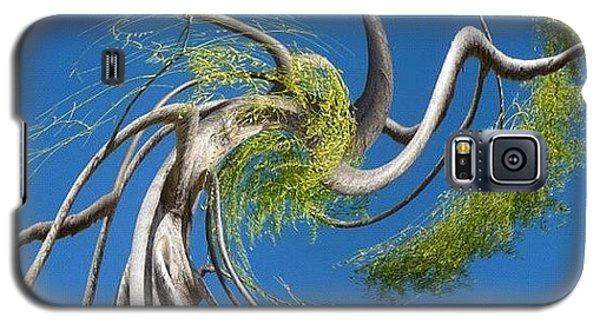 Twirl Galaxy S5 Case