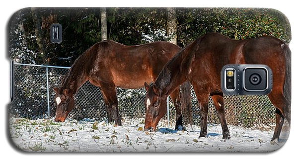 Galaxy S5 Case featuring the photograph Two Bay Thoroughbred Horses Grazing In Snow by Valerie Garner