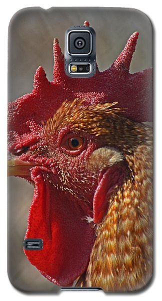 Urban Rooster Galaxy S5 Case by Lisa Phillips