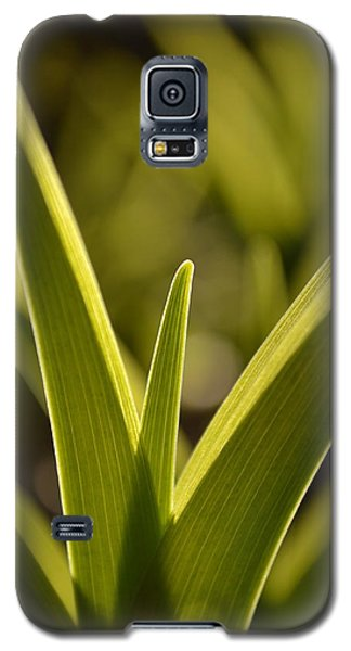 Variegated Light 1 Galaxy S5 Case