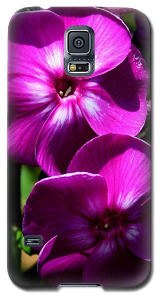 Galaxy S5 Case featuring the photograph Vibrant by Karen Harrison